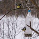 Jak prakticky využít PET lahve v zahradě