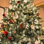 Jak vybrat vánoční stromek