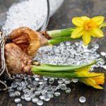 Už víte, jaké květiny zasadíte na jaře?