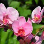 Jak pěstovat orchideje? Osvědčený postup