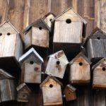 Jak postavit ptačí budku?