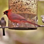 Co sypat ptáčkům do krmítek?