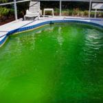 Zelená voda v bazénu – Takhle s ní skoncujete